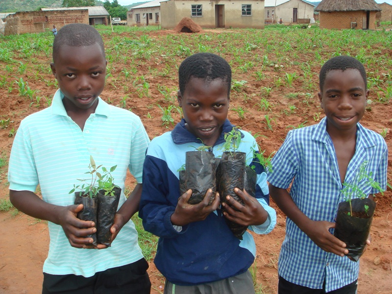 Schoolchildren helping out with the tree planting